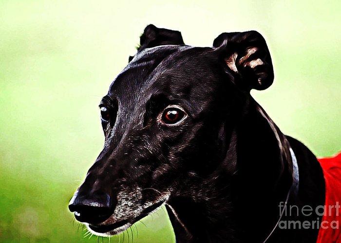 Greyhound Dog Mixed Media Greeting Cards