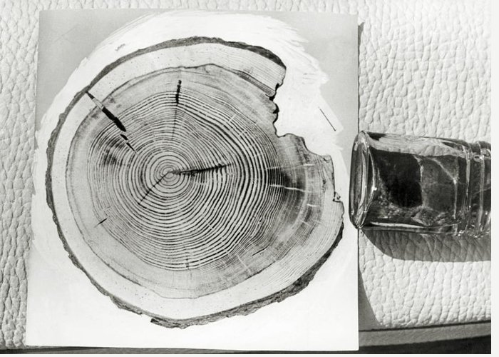 Growth Ring Greeting Card featuring the photograph Growth Rings On A Tree From Tunguska by Ria Novosti