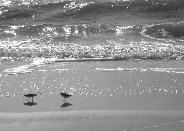 Beach Greeting Card featuring the photograph Gulls Taking A Walk by Cindy Lee Longhini