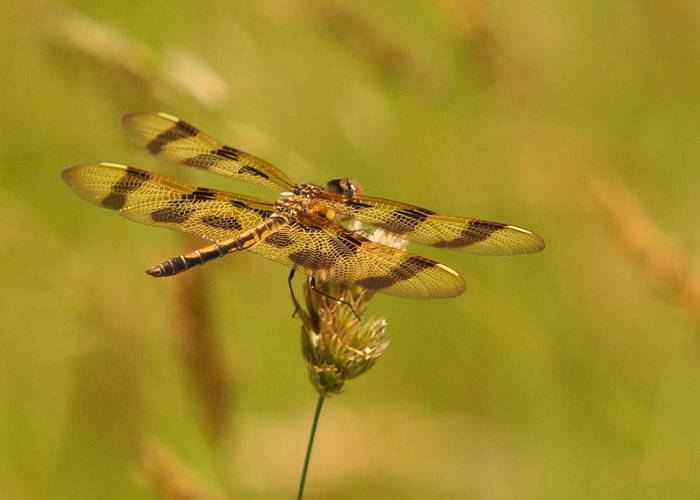 Dragonfly Greeting Card featuring the photograph Halloween by Deborah Bifulco