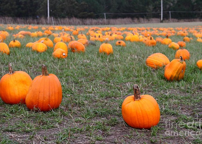 Pumpkin Greeting Card featuring the photograph Halloween Pumpkin Patch 7d8383 by Wingsdomain Art and Photography