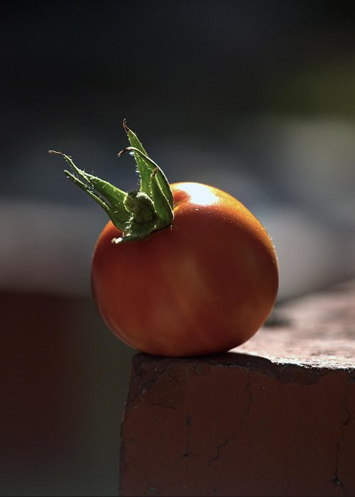 Tomato Greeting Card featuring the photograph Hang On by Joe Schofield