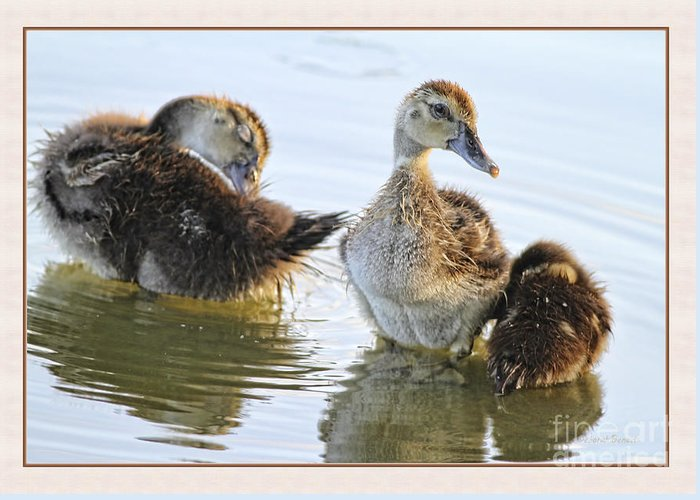 Ducklings Greeting Card featuring the photograph Hanging With The Buds by Deborah Benoit