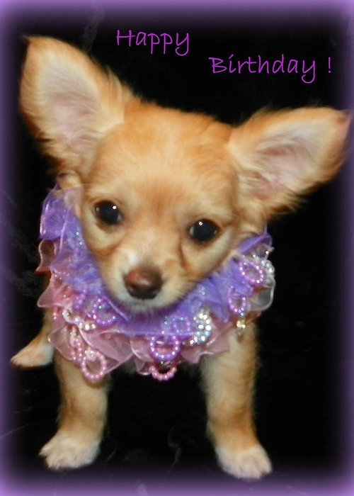 Happy Birthday Chihuahua Greeting Card For Sale By Sheri Mcleroy