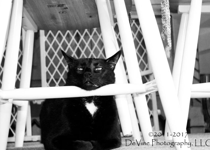 Cat Greeting Card featuring the photograph Harry One Twisted Cat by Stephani JeauxDeVine