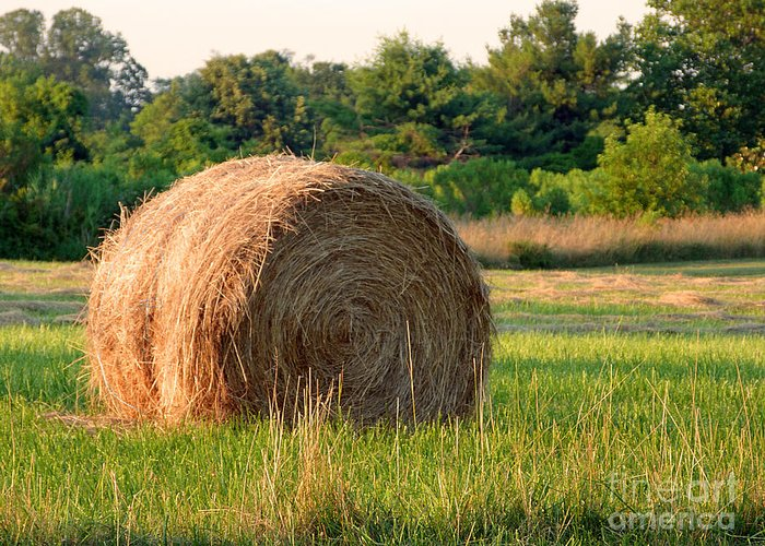 Hay Greeting Card featuring the photograph Haybale by Louise Peardon