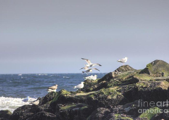 Ocean Greeting Card featuring the photograph Hdr Seagulls At Play by Pictures HDR