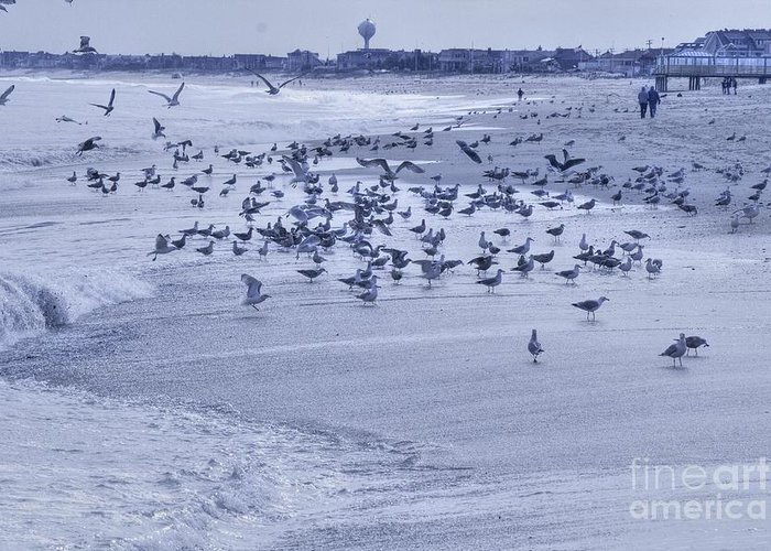 Ocean Greeting Card featuring the photograph Hdr Seagulls At Play In The Sand by Pictures HDR
