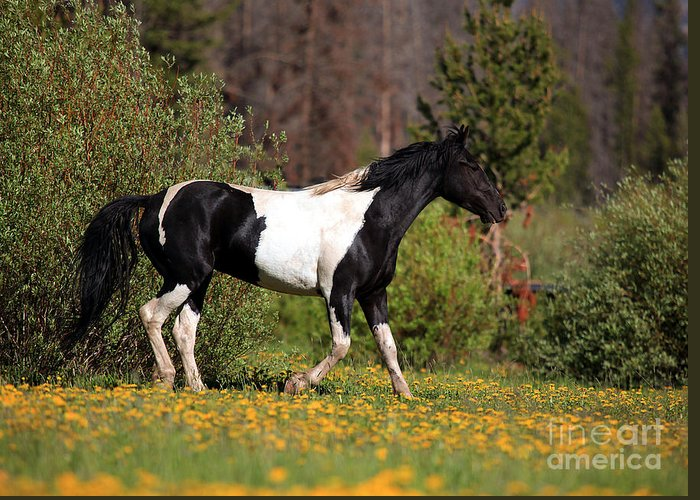 Horse Greeting Card featuring the photograph Headed Home by Terri Cage