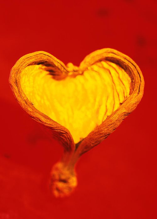 Shell Greeting Card featuring the photograph Heart-shaped Nutshell by Carlos Dominguez