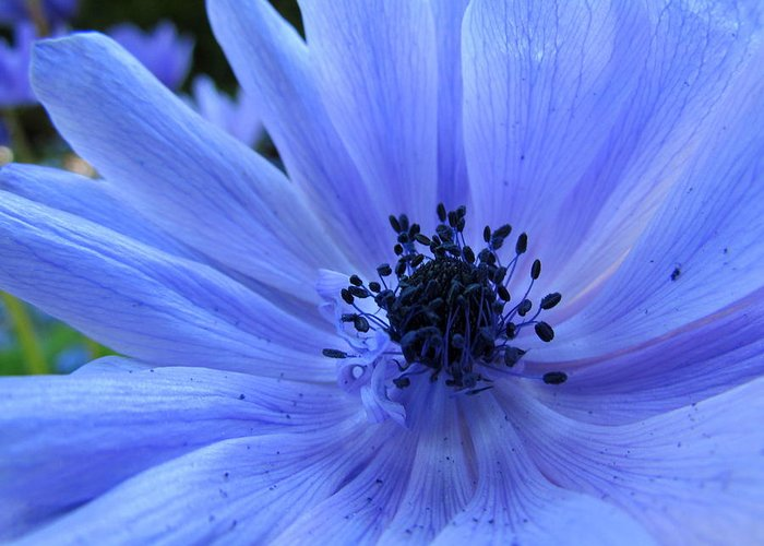 Blue Greeting Card featuring the photograph Here I Am by Eva Kondzialkiewicz