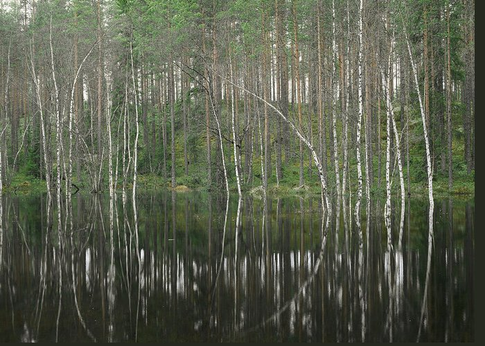 Scenic Views Greeting Card featuring the photograph High Waters In A Forest Of Evergreens by Mattias Klum