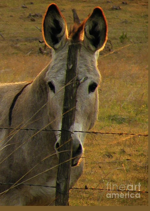 Donkey Greeting Card featuring the photograph Hill Country Camouflage by Joe Jake Pratt