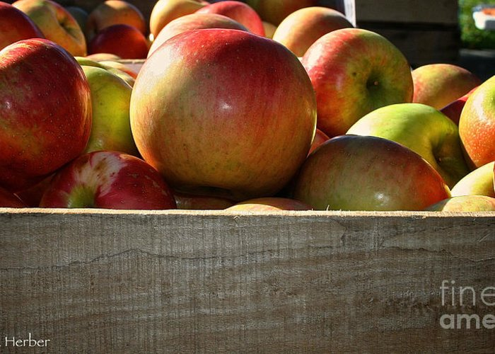 Outdoors Greeting Card featuring the photograph Honey Crisp by Susan Herber