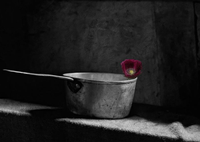 Still Life Greeting Card featuring the photograph Hope by Robin-Lee Vieira