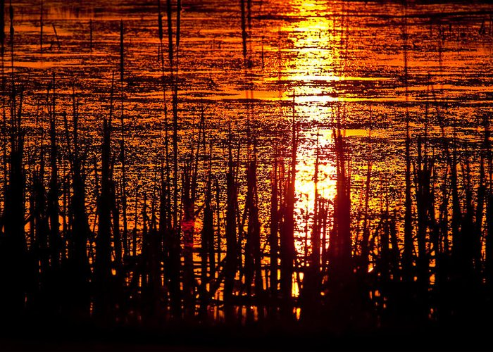Horicon Greeting Card featuring the photograph Horicon Marsh Sunset Wisconsin by Steve Gadomski