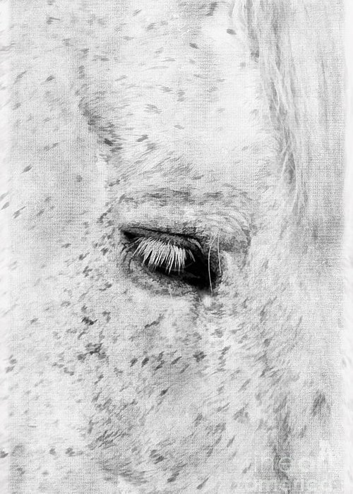 Animal Greeting Card featuring the photograph Horse Eye by Darren Fisher