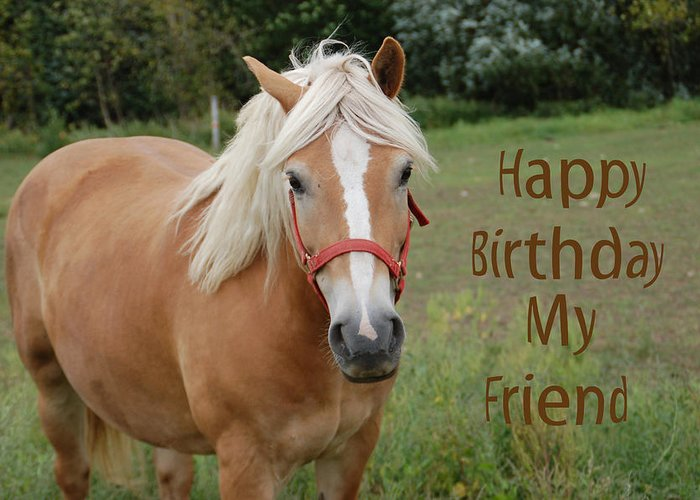 Horse Friend Birthday Greeting Card for Sale by Aimee L ...