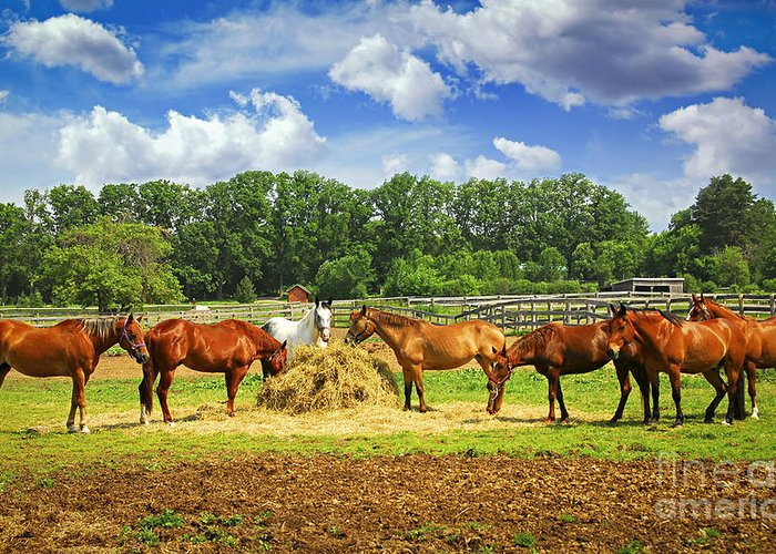 Horse Greeting Card featuring the photograph Horses At The Ranch by Elena Elisseeva