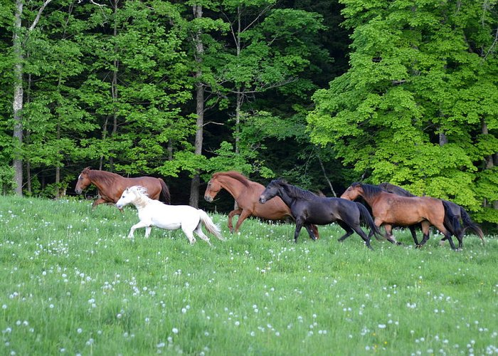 Horses Greeting Card featuring the photograph Horses by Lisa Jaworski