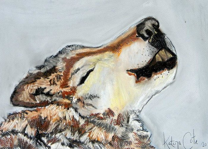 Howling Wolf Drawing By Katina Cote