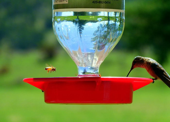 Hummingbird Greeting Card featuring the photograph Hummingbird And A Bee by Eric Neitzel