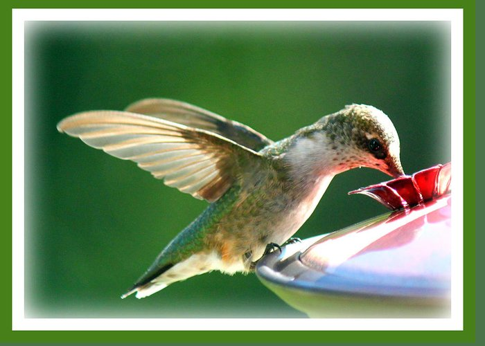 Nature Greeting Card featuring the photograph Hummingbird Eating by Katie OKeefe