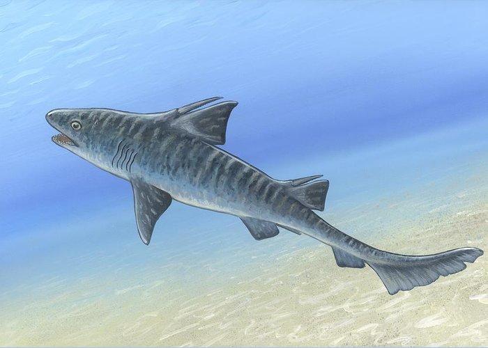 Hybodus Greeting Card featuring the photograph Hybodus Shark, Artwork by Richard Bizley
