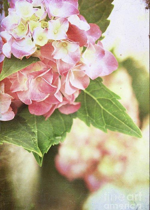 Hydrangea Greeting Card featuring the photograph Hydrangeas by Stephanie Frey