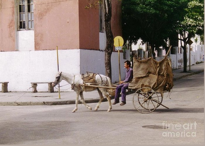 Horse And Cart Greeting Card featuring the photograph I Am My Own Boss by John Malone