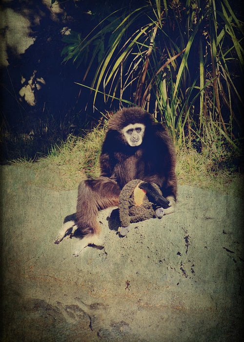 Primates Greeting Card featuring the photograph I Need A Hug by Laurie Search