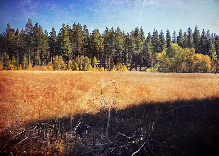 South Lake Tahoe Greeting Card featuring the photograph I Roam by Laurie Search