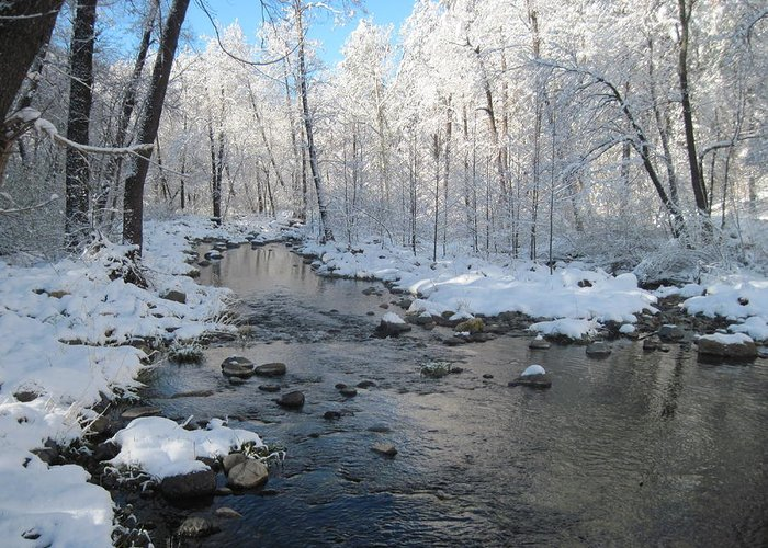 Creek Greeting Card featuring the photograph Icing On The Trees by Sandy Tracey