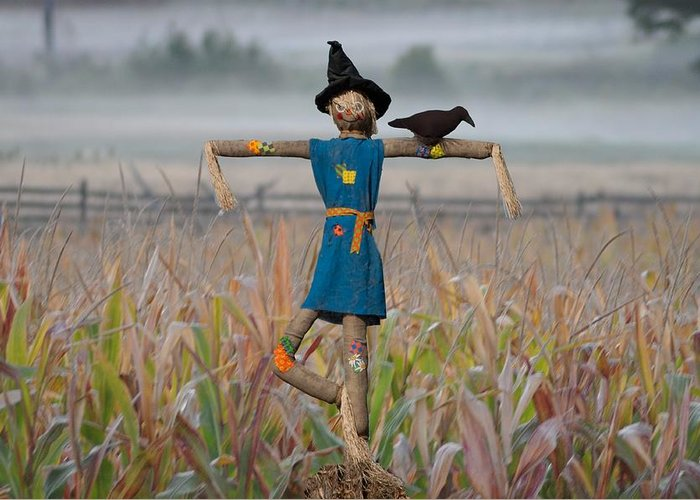 Scarecrow Greeting Card featuring the photograph If I Only Had A Brain by Bill Cannon