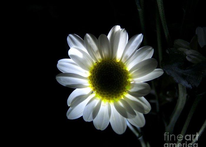 Artoffoxvox Greeting Card featuring the photograph Illuminated Daisy Photograph by Kristen Fox