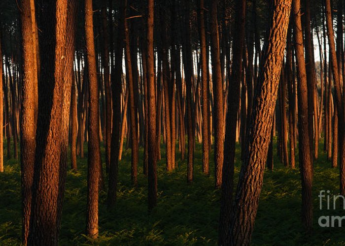Paisaiak Greeting Card featuring the photograph Illuminated Forest by David Gimenez Aldalur
