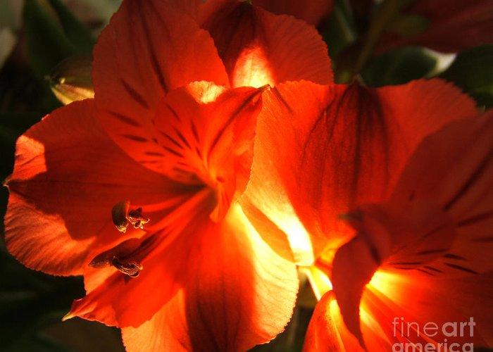 Artoffoxvox Greeting Card featuring the photograph Illuminated Red Orange Alstromeria Photograph by Kristen Fox