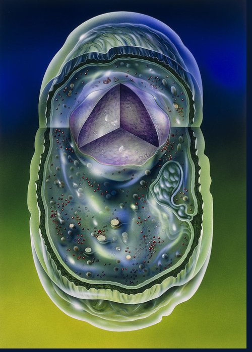 Microbiology Greeting Card featuring the photograph Illustration Of Structures Of A Typical B by John Bavosi