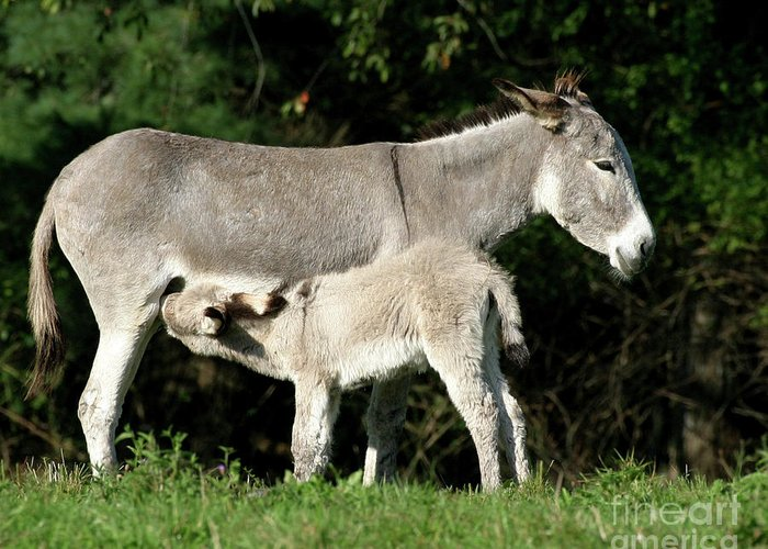 Donkey Greeting Card featuring the photograph I'm Thirsty by Deborah Smith