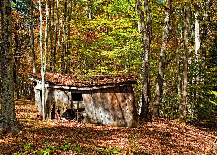 West Virginia Greeting Card featuring the photograph In Autumn Woods by Steve Harrington