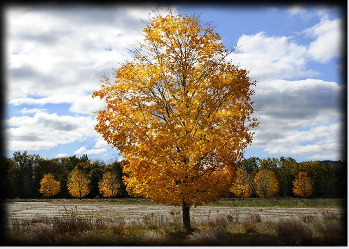 Autumn Greeting Card featuring the photograph In My Dreams... by Luke Moore