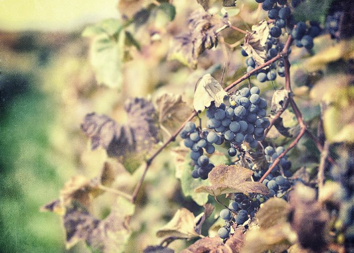 Grapevines Greeting Card featuring the photograph In The Vineyard by Lisa Russo