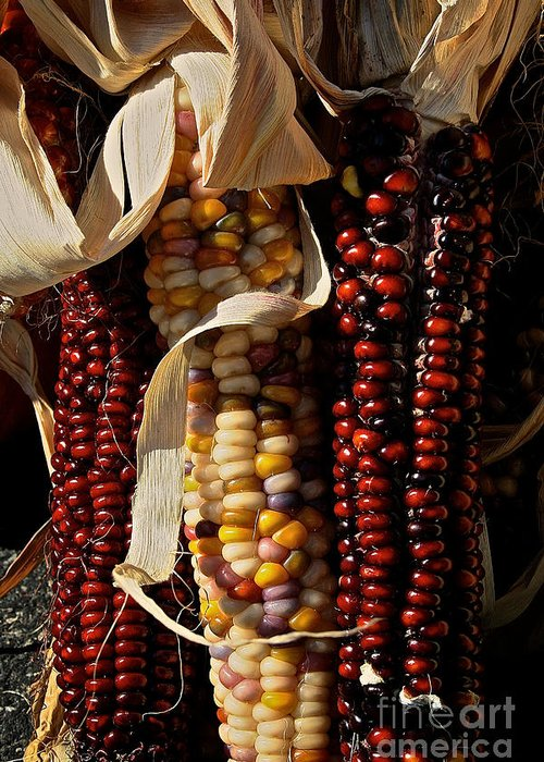 Autumn Greeting Card featuring the photograph Indian Corn by Susan Herber