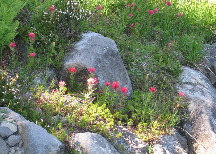 Flowers Greeting Card featuring the photograph Indian Paintbrush by Lisa Spencer Osterhoudt