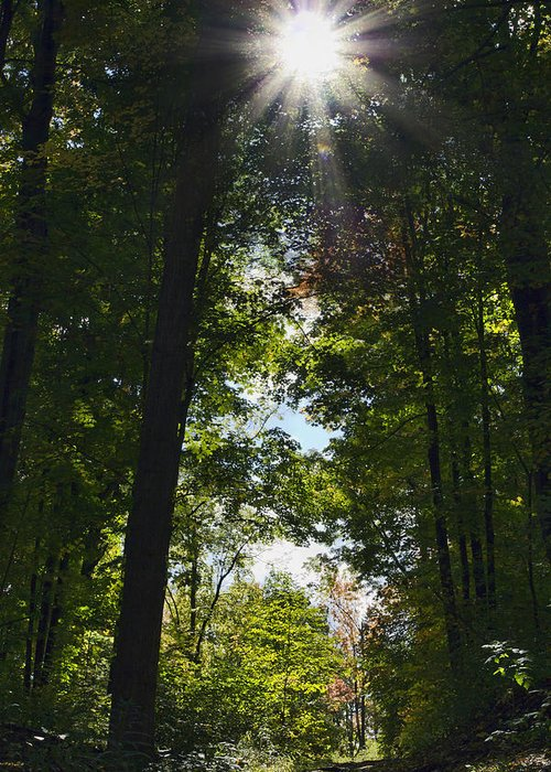 Fall Greeting Card featuring the photograph Into The Light by Peter Chilelli