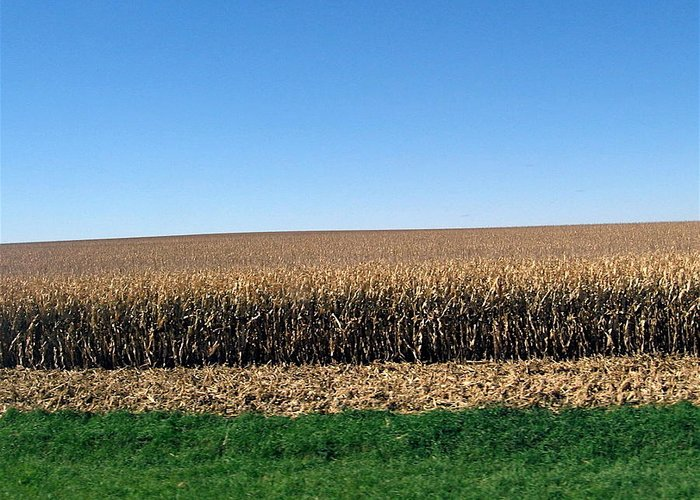 Iowa Greeting Card featuring the photograph Iowa Landscape Iv by David Ritsema