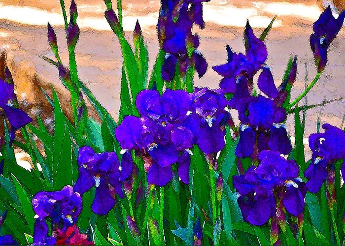 Floral Greeting Card featuring the photograph Iris 23 by Pamela Cooper