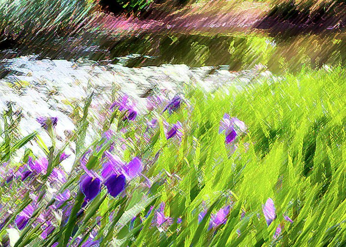 Iris Greeting Card featuring the photograph Iris And Water by Linde Townsend