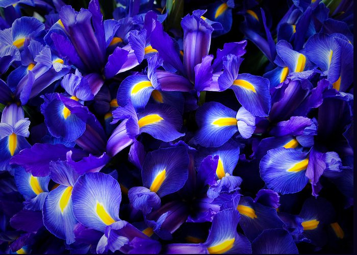 Pike Place Market Greeting Card featuring the photograph Iris by Lynn Wohlers