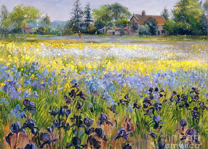 Landscape; Iris; Flower; Flowers; Irises; Tree; Trees; Field; House Greeting Card featuring the painting Irises And Two Fir Trees by Timothy Easton